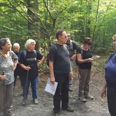 21 septembre 2016, Forêt de Chantilly - Coye-la-Forêt